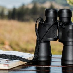 10 Best Places for Fall Birdwatching in Sequim