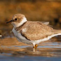 Great Birdwatching on the Olympic Peninsula