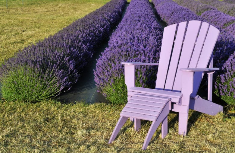 10 stunning Lavender farms to see in Sequim this summer