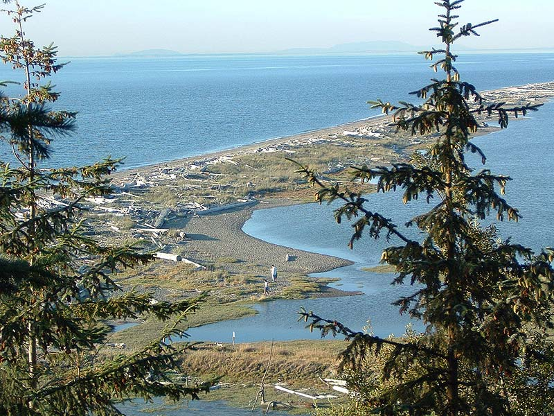 7 fun things to do on the Dungeness Spit