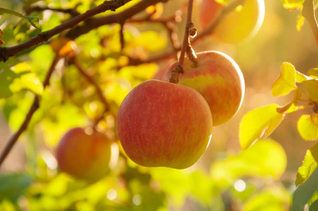 Visit Alpenfire Cider Near our waterfront cottages in Sequim